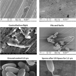 Survival of Bacillus pumilus spores for a prolonged period of time in real space conditions.